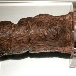 The Largest Fossilized Human Turd Ever Found Came From a Sick Viking